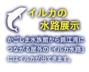 イルカの水路展示 水族館のプールを飛び出して、外の水路で自由に遊ぶイルカを見てみよう!