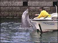 イルカ水路のトレーニングの様子2