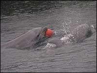 イルカ水路のトレーニングの様子4