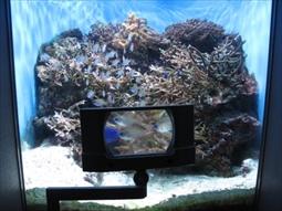 サンゴ礁の礁池の様子