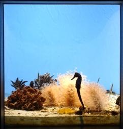 サンゴ礁の入り江の様子