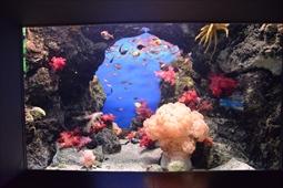 海中に咲き誇る~トゲトサカの群生の様子
