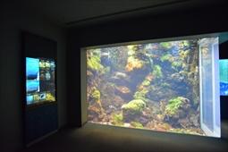 海藻と魚たちの様子
