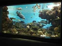 サンゴ礁水槽の様子