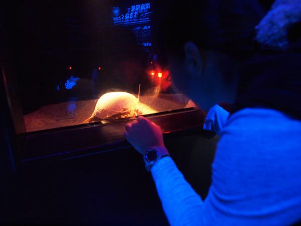 会場_ペンライトでダイオウグソクムシを照らす