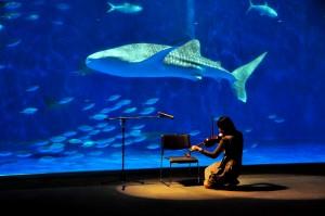 02 特別賞 水族館の音楽会