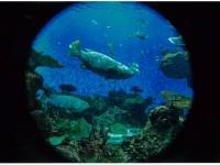 15 入選 サンゴ礁の楽園
