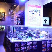 サンゴ繁殖センター