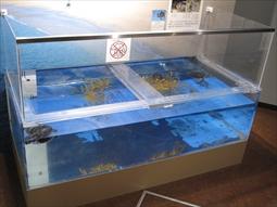 ウミガメ水槽の様子