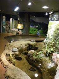 里山の小川水槽の様子