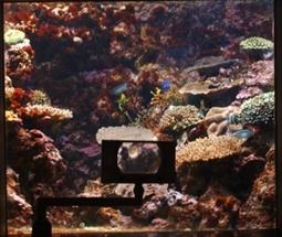 サンゴ礁の礁斜面の様子