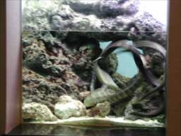 ウミヘビ水槽の様子